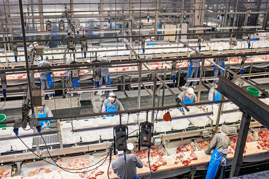 Danish Crown and Intelligent Systems enter cooperation on modernization of the world's most advanced slaughterhouse